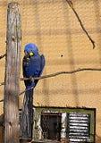 Der Papagei, der auf dem Zweig sitzt Lizenzfreie Stockbilder