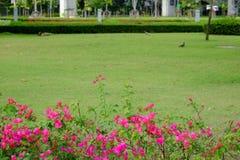 Der Park Lizenzfreie Stockbilder