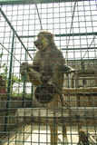 Der Pavian sitzt in einem Käfig Stockbilder