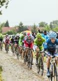 Der Peloton auf einem Cobbled Straßen-Tour de France 2014 Lizenzfreies Stockbild