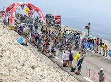 Der Peloton auf Mont Ventoux Stockfotos