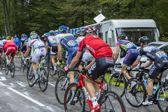 Der Peloton - Tour de France 2014 Stockbild