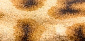 Der Pelz einer Giraffe in der Nahaufnahme stockfoto