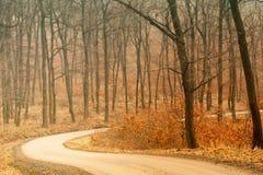 Der Pfad im Wald lizenzfreies stockfoto