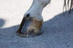 Der Pferd-` s Huf stockfoto