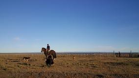 Der Pferdereiter - große Insel des Landes des Feuers - NO-Mannes - Landes weit von Zivilisation stockfoto