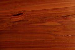 Der Pflaume-Baum. Stockbild