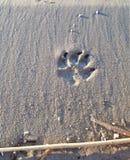 Der Pfotenabdruck des Hundes im Sand stockfoto