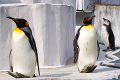 Der Pinguin, der in der Sonne sich aalt lizenzfreie stockbilder