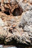 Der Pirat und der Taucher Anaconda lizenzfreie stockfotos