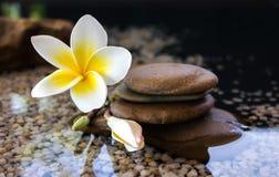Der Plumeria oder Frangipani, die auf Wasser und Kiesel verziert werden, schaukeln in Zen Stockbild