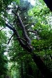 Der polnische Wald Stockfotografie