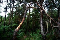 Der polnische Wald Stockbilder