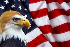 Der Präsident - nordamerikanischer Weißkopfseeadler auf amerikanischer Flagge Lizenzfreie Stockfotografie