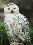 Der Prag-Zoo Lizenzfreie Stockbilder