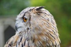 Der Prag-Zoo Lizenzfreie Stockfotografie