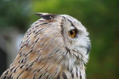 Der Prag-Zoo Lizenzfreies Stockbild