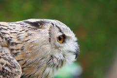 Der Prag-Zoo Lizenzfreie Stockfotos
