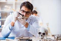 Der Professor, der menschliches Skelett im Labor studiert stockfotos
