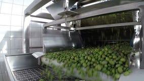 Der Prozess der olivgrünen Reinigung in einer modernen Ölmühle stock footage