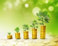 Der Prozess des Wachstums des Einkommens Stockfotos