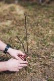 Der Prozess der Verpflanzung von B?umen im Garten lizenzfreies stockfoto
