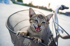 Der Pussycat im Korb des Fahrrades lizenzfreie stockbilder