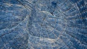 Der Querschnittbaum im Sonnenschein Lizenzfreie Stockfotos