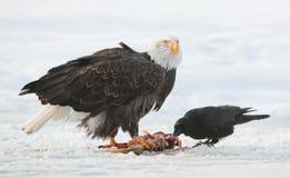 Der Rabe und der Weißkopfseeadler Lizenzfreie Stockfotos