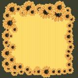 Blumen der Kamille Stockbild