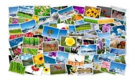 Der Rahmen gemacht von den verschiedenen Naturfotos Stockfotografie