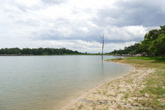 Der Rand des Teichs im Park Stockbild