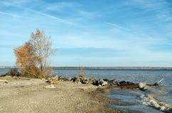 Der Rand des Ufers mit einem Klotz und einem Baum Lizenzfreies Stockfoto