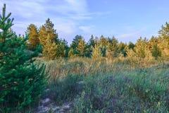 Der Rand des Waldes Stockfoto