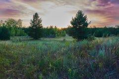 Der Rand des Waldsonnenuntergangs Stockbilder
