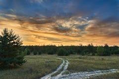 Der Rand des Waldsonnenuntergangs Lizenzfreies Stockbild