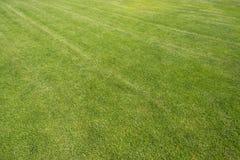 Der Rasen auf dem Fußballplatz Lizenzfreie Stockfotografie