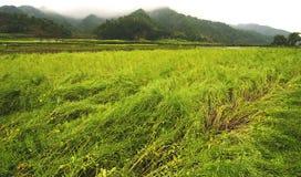Der Rasen im Wind Stockfotos