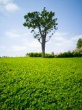 Der Rasen mit grünem Baum im Frühjahr Stockbilder