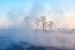 Der Raureif im Nebel Stockfoto