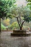 Der Regen Stockbild