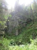 Der Regen im Wald Lizenzfreie Stockfotografie