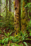 Der Regen-Wald Stockfotos