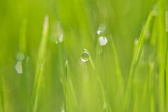 Der Regentropfen auf dem grünen Gras Lizenzfreie Stockfotografie