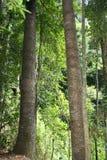 Der Regenwald lizenzfreie stockfotografie