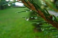 Der regnerische Zweig Stockbilder