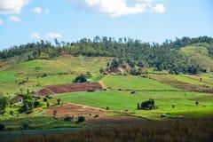 Der Reis auf dem Berg Lizenzfreies Stockbild