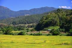 Der Reis auf dem Berg Stockbilder