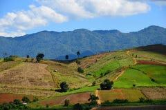 Der Reis auf dem Berg Stockbild