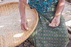 Der Reis, der für thailändisch ist, isst alle Person Lizenzfreie Stockfotografie